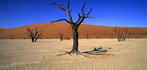 Мертвый лес Vlei