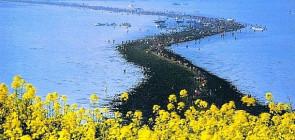 В Корее расступилось море