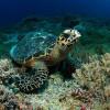 Морской парк «Риф Туббатаха» на Филиппинах