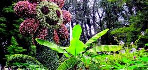 Остров цветов Майнау в Германии