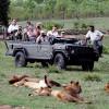Сафари в Африке (фото и видео)