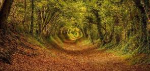 Сказочный тоннель в Англии
