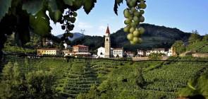 Гастрономические туры в Италию