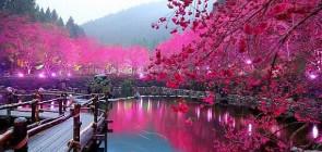 Времена года в Японии