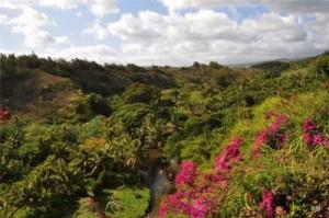 остров-сад Кауаи, Гавайи