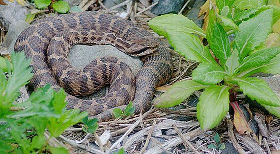 ужасные острова со змеями