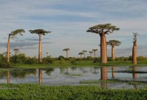 Удивительная природа на острове Сокотра
