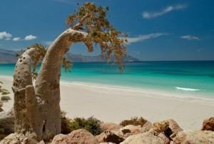 Остров Сокотра входит в архипелаг на северо-западе Индийском океане