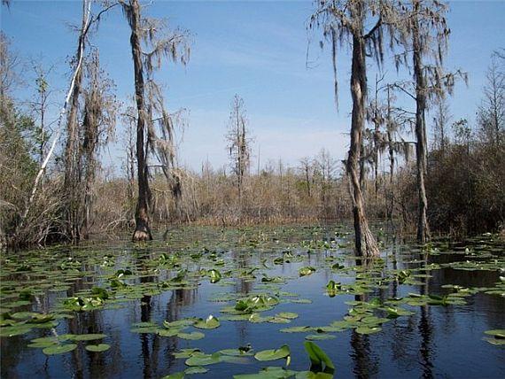 Страшное болото Окефеноки