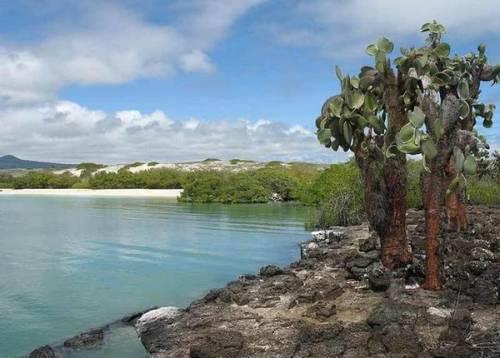 Галапагосские острова, Tortuga Bay