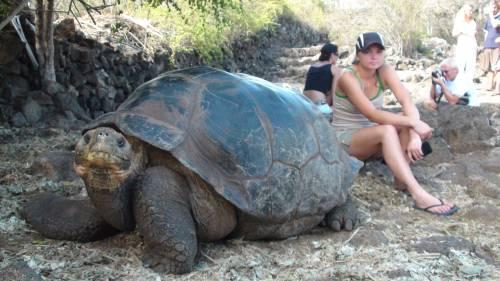 Галапагосские острова действительно известны своими гигантскими галапагосскими черепахами