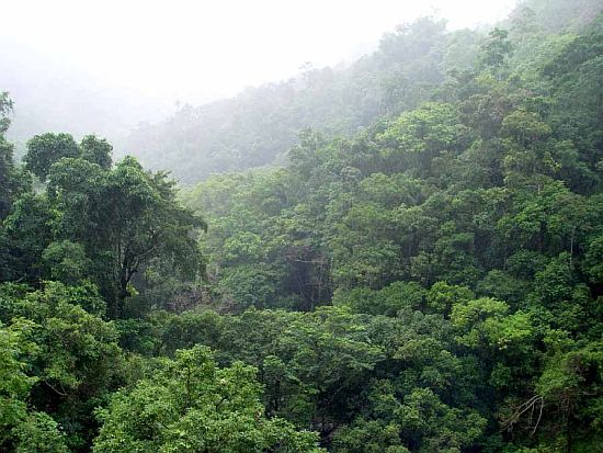 Дождевые леса Амазонии – настоящее джунгли, раскинувшиеся вокруг реки амазонки