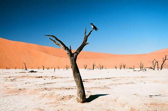 Мертвая Долина. Пустыня Намиб фото с птицей