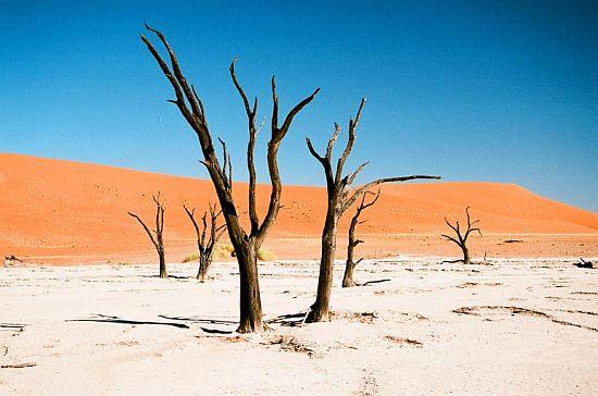Мертвый лес Vlei в парке Sossusvlei