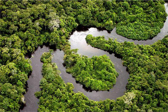 Треть территории Бразилии составляет Амазония - дождевые леса