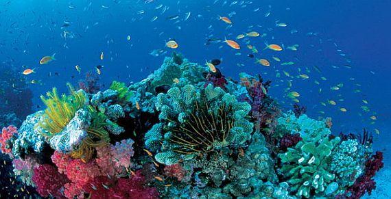дайвинг большой барьерный риф
