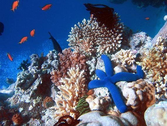фото большой барьерный риф