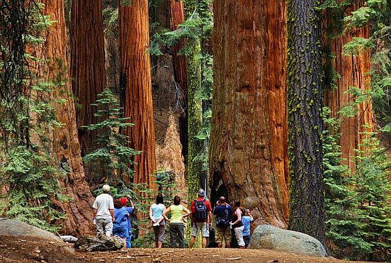 Именно здесь находится сразу несколько национальных парков, призванных охранять эти уникальные деревья