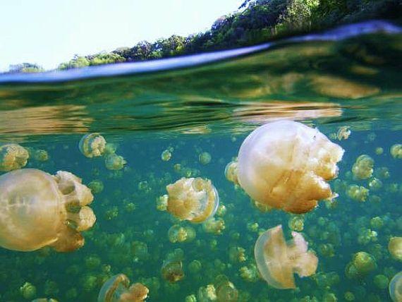 озеро с медузами