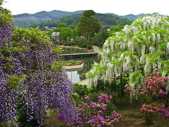 парк цветов в японии