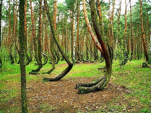 Лес в польше сейчас является