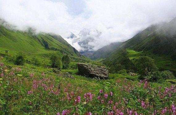 долина цветов фото