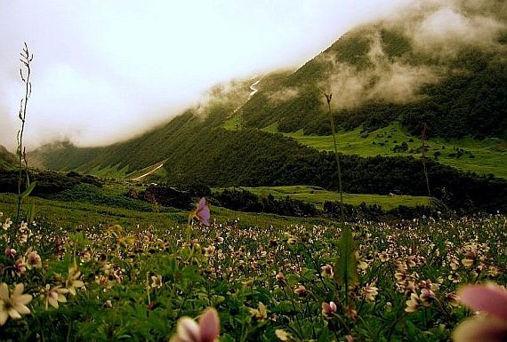 долина цветов valley of flowers