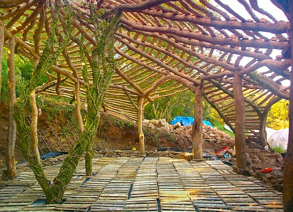 дом из деревьев