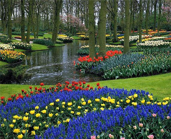 красивый парк цветов