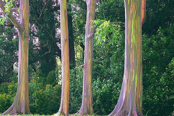 красочное дерево