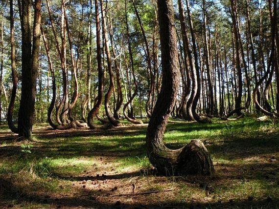 кривые деревья