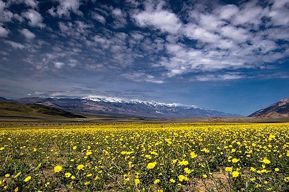 смотреть долина цветов