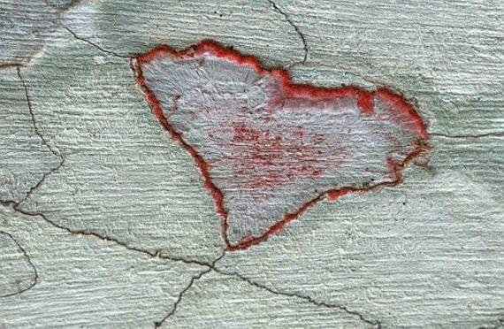 Лишайник в форме сердца в болотистом питомнике во Флориде