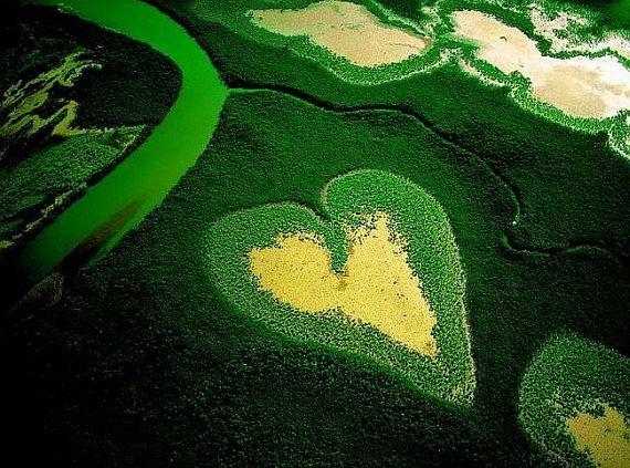 Сердце из мангровых деревьев, Новая Каледония