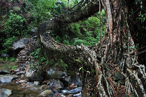 необычные мосты из деревьев