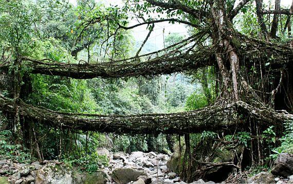 живые мосты
