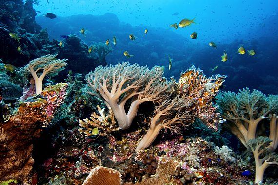 морской парк фото