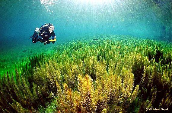 gruner see зелёное озеро
