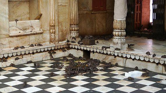Необычный храм с крысами