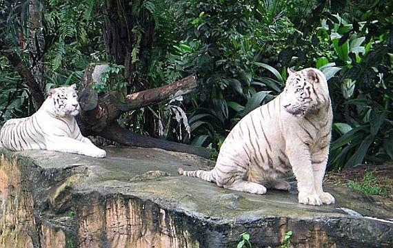 лучший зоопарк