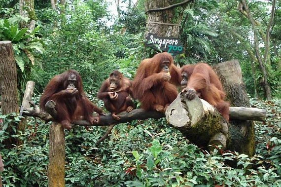 самый лучший зоопарк в мире