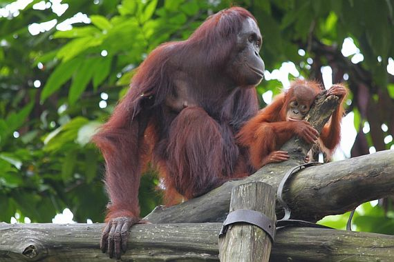 сингапурский зоопарк фото