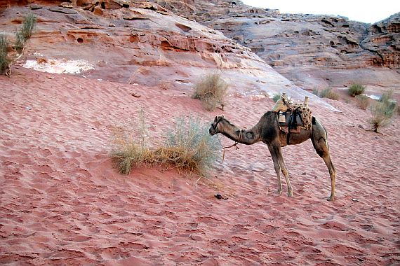 розовый песок в пустыни вади рам