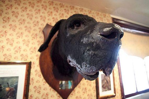 Собака Баскервилей