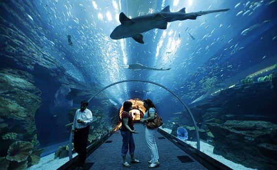 аквариум дубай молл