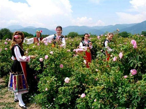 болгария, долина роз