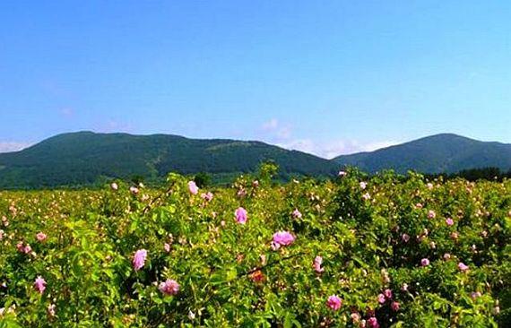 розы долина болгарии