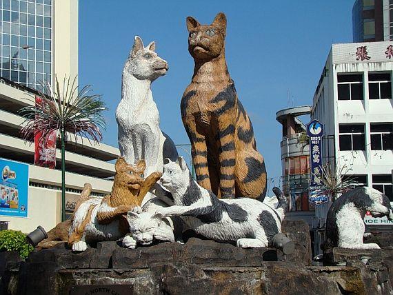 город кошек фото