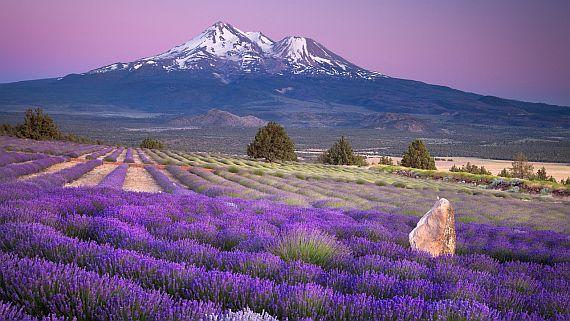 фото лавандовые поля