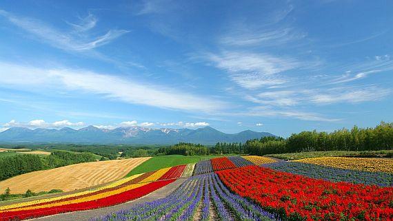 лавандовое поле фото